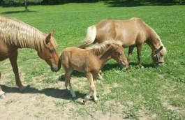 Adoptable Horses/Livestock