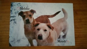 mandy & meisha